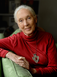 Hire Jane Goodall as