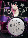 Book Acro Cats and The Rock Cats for your next event.